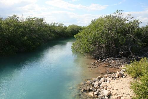 Mangrove réserve Punta Allen