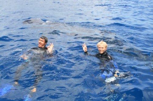 Requins Baleine a Isla Contoy